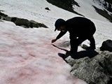 В итальянских Альпах появился розовый лед