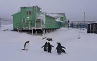 В Антарктиду в разгар зимы вернулись пингвины