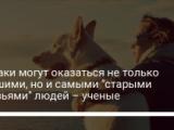 """Собаки могут оказаться не только лучшими, но и самыми """"старыми друзьями"""" людей – ученые"""