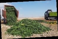 В Испании уничтожают урожай из-за обвала цен