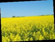 С начала года Украина на $1 млрд сократила сальдо торговли агропродукцией