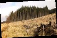 Арбитраж разрешил Украине ограничить экспорт леса