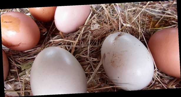 Почему яйца неподешевеют. Производители назвали причину