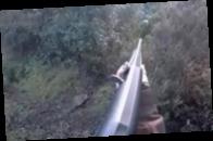 В Италии охотница отбивалась от кабана винтовкой