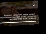 Чудеса науки. Мышам с травмой спинного мозга вернули способность ходить – есть регенерация