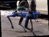 Полиция Нью-Йорка тестирует робопса с искусственным интеллектом (видео)