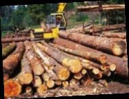 СБУ предотвратила контрабанду ценной древесины в ЕС на 300 тысяч евро