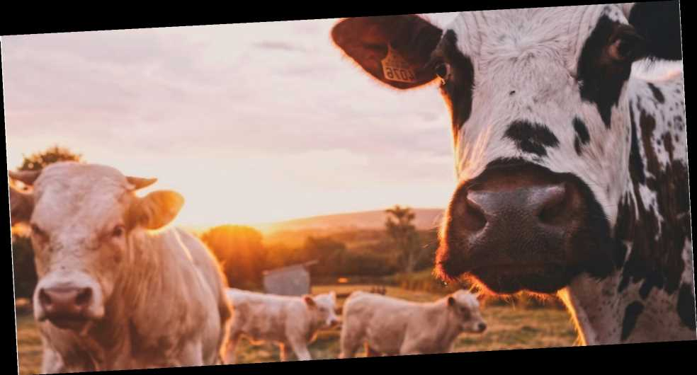 Меньше мяса, молока, яиц. ВУкраине загод упало производство продуктов питания