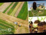 Каждый украинец имеет право на бесплатные гектары земли: что для этого нужно