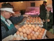 Производство яиц в Украине сократилось на 16,1% — Госстат