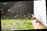 В Нидерландах провели четвертую национальную перепись пчел