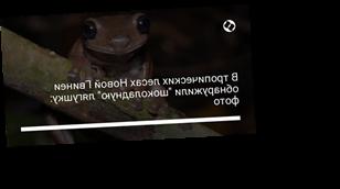 """В тропических лесах Новой Гвинеи обнаружили """"шоколадную"""" лягушку: фото"""