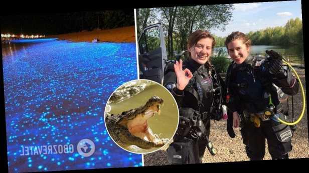 Молодая британка отбила свою сестру-близняшку от крокодила во время отдыха в Мексике