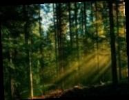 Шмыгаль рассказал, во сколько обойдется обещанная инвентаризация лесов