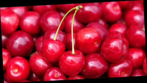 В Украине гибнет урожай знаменитой мелитопольской черешни: что будет с ценами на ягоды