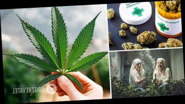 В Украине легализуют марихуану, лекарства с ней будут продавать в аптеках: кому и зачем это нужно