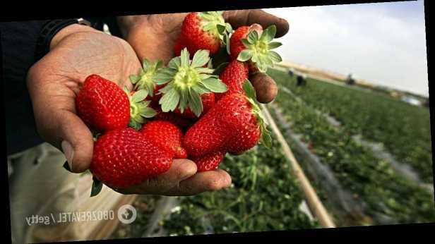В Украине резко упали цены на капусту и клубнику: сколько стоят продукты