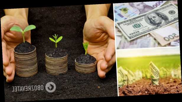 В Украине с 1 июля откроют рынок земли: сколько будет стоить, как купить и продать