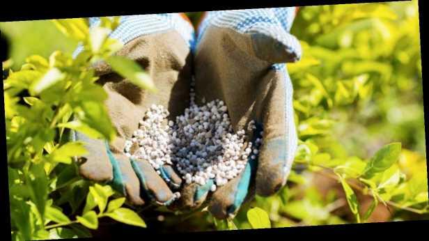Монополия Фирташа в случае запрета на импорт удобрений »задавит» экономику Украины – СМИ