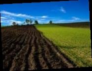 Украинские аграрии получат госгарантии на приобретение земли