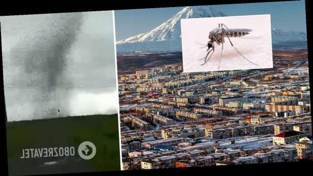 В России пронесся огромный смерч из комаров: очевидцы показали видео