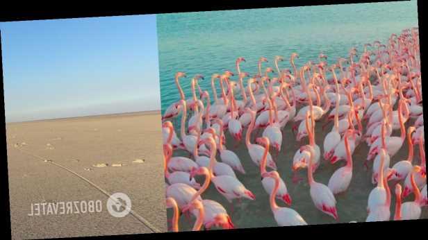 В Турции из-за засухи погибли сотни фламинго, в озере не осталось воды. Фото