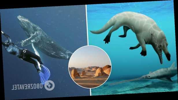 В Египте обнаружили останки кита, который мог плавать в воде и ходить по суше