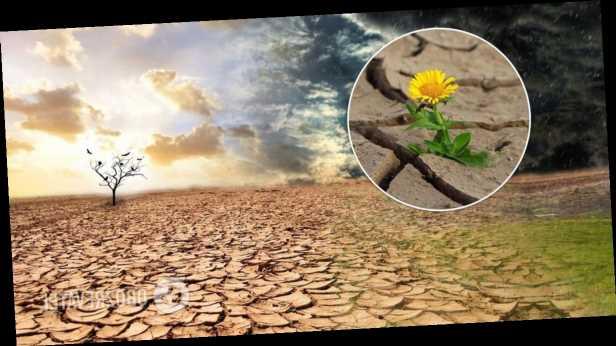 Ученые заявили, что Европу ждут сильные засухи: какие регионы в зоне риска