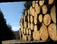 Украина намерена разрешить вывоз леса