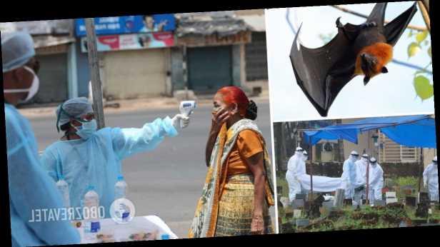 В Индии симптомы смертельно опасного вируса Nipah обнаружили у 11 человек: что известно об инфекции