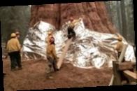 В Калифорнии горят гигантские секвойи