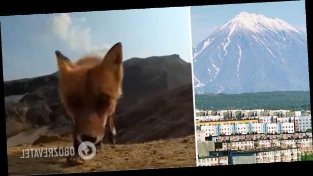 В России лиса украла у туристов камеру и запечатлела побег на видео
