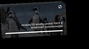 В ЮАР пчелы убили 63 редких африканских пингвина