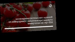 Японцы лакомятся генетически отредактированными помидорами по 600 грн за килограмм