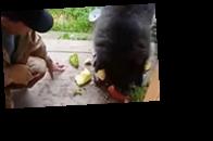 На Алтае медвежонок в поисках еды пришел к людям