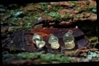 На Полтавщине археологи нашли уникальные украшения
