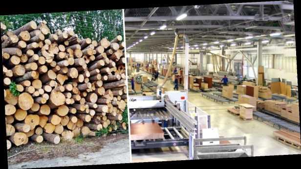 Украинской мебели больше не будет? Почему нельзя отменять запрет на экспорт леса в ЕС