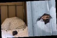 В Канаде метеорит упал на подушку спящей женщины